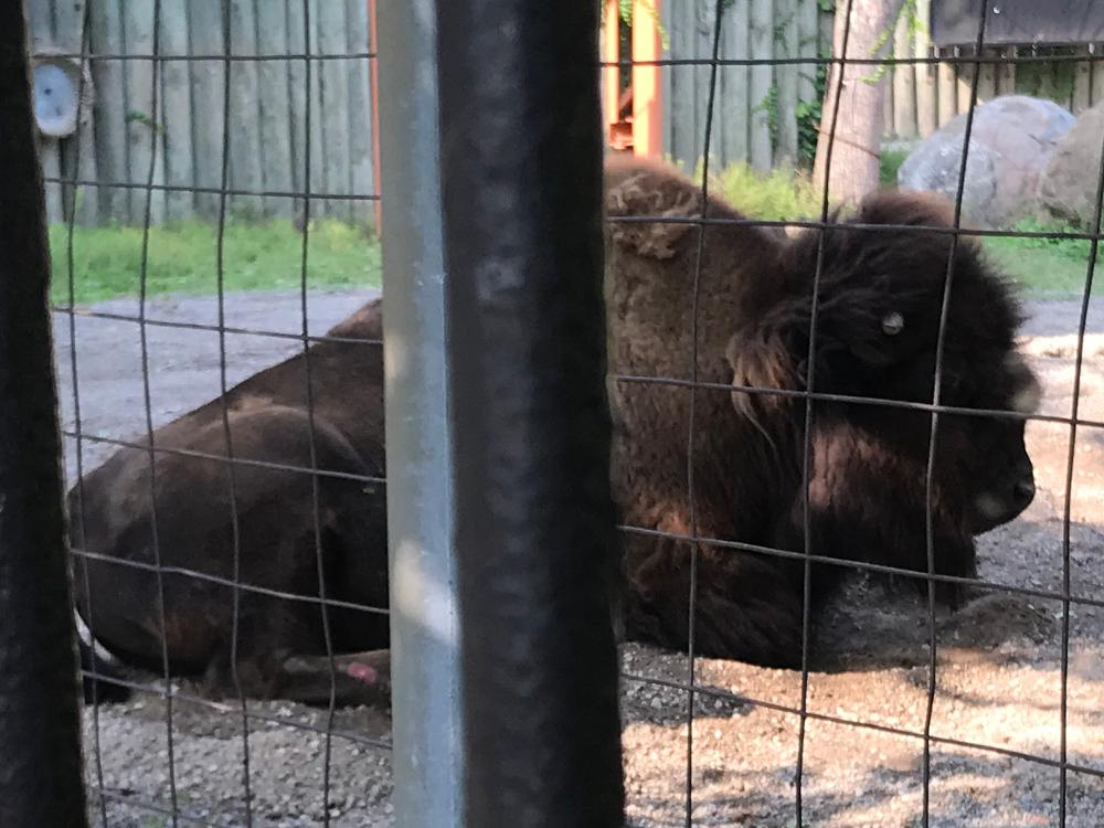 Buffalo Zoo Buffalo